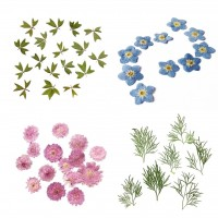 PACK 10Pcs Small Pressed Real Dried Flowers Leaves DIY Jewelry Card Album   302754024333
